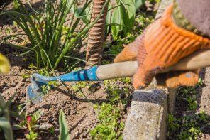 Frühjahrsputz im Garten! So bringen Sie Ihren Garten wieder in Form