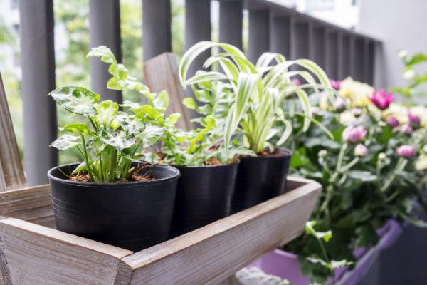 Mini Balkon mit Pflanzen