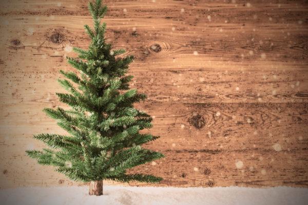 Weihnachtsbaum steht vor Holzwand im Schnee