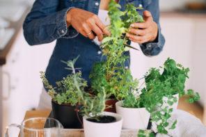 Kräuter in der Wohnung – es braucht nicht immer einen Garten