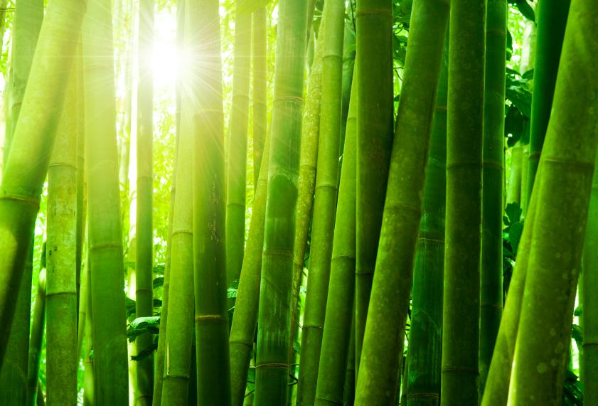 Gartengestaltung mit Bambus: 10 Tipps und Tricks - Wohnungs ...