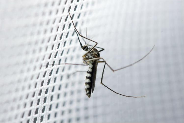 insektenschutz - Mücke sitzt am Insektenschutzgitter