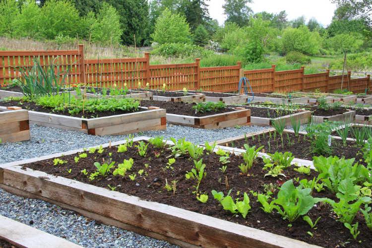 Selbstgemachter Garten