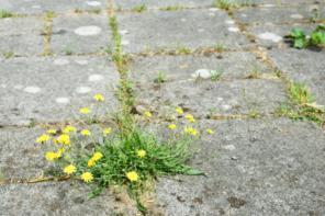 Unkraut effektiv beseitigen – Die 5 besten Hausmittel
