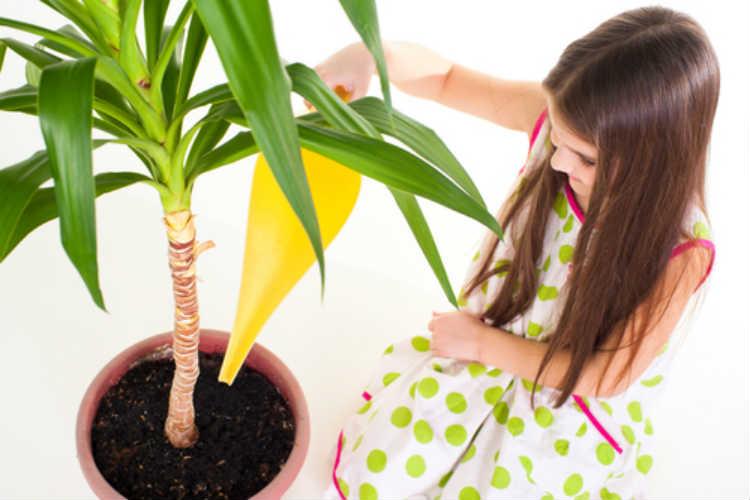 Yucca Palme - Robuste Zimmerpflanze mit geringem Pflege-Anspruch